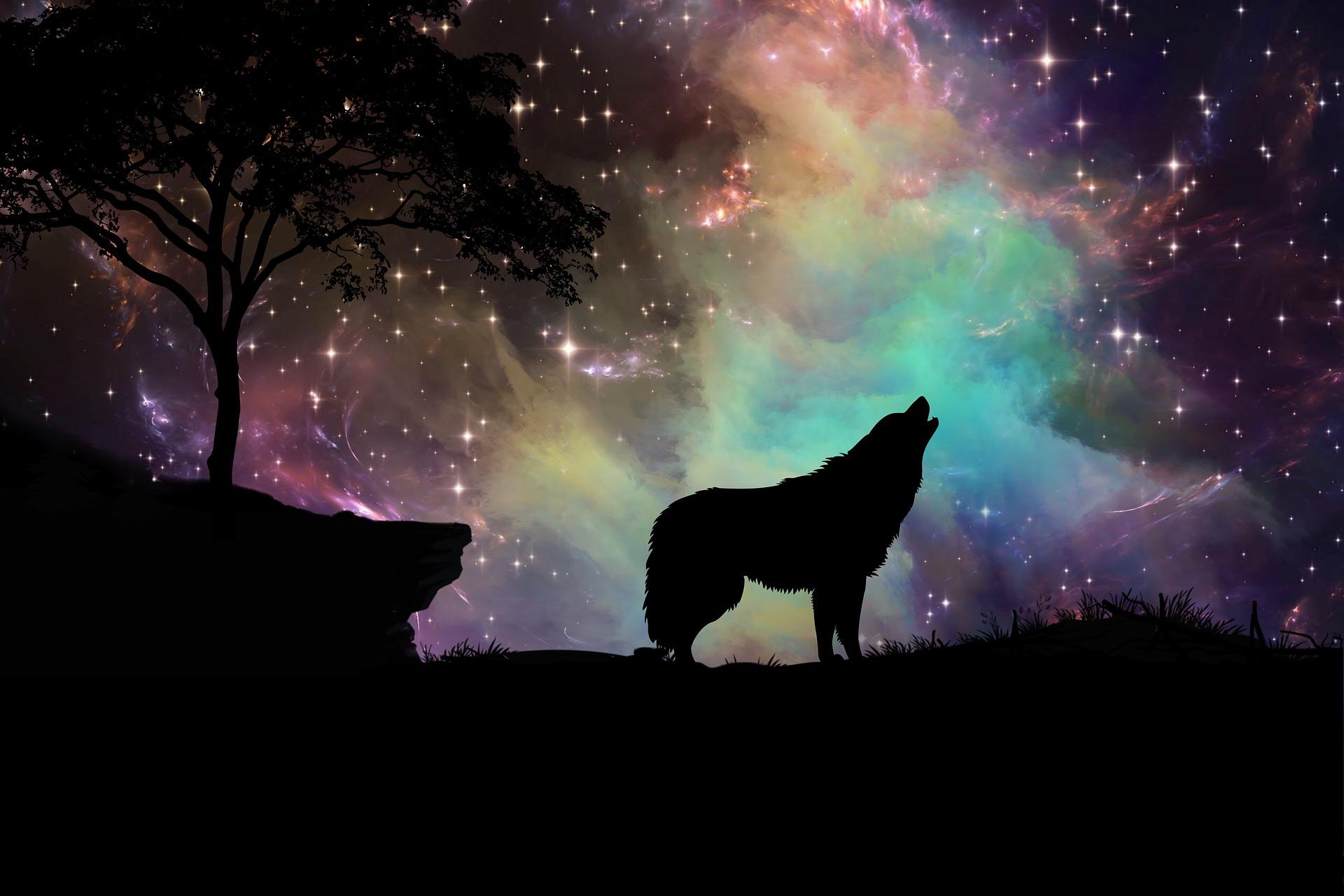 少年 見逃し オオカミ
